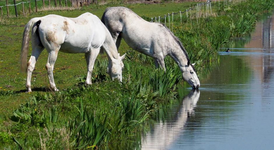 Spółki wodne zmeliorują za środki z PROW