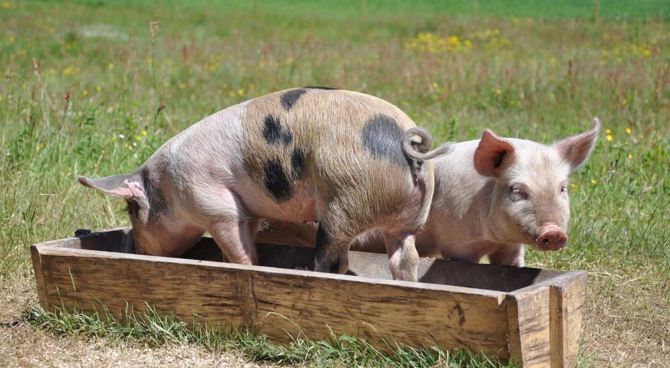 Czy mączki mięsno-kostne powrócą jako pasze dla zwierząt?