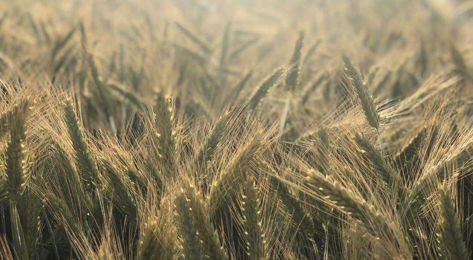 Lista Odmian Zalecanych dla pszenżyta ozimego na sezon 2021/2022