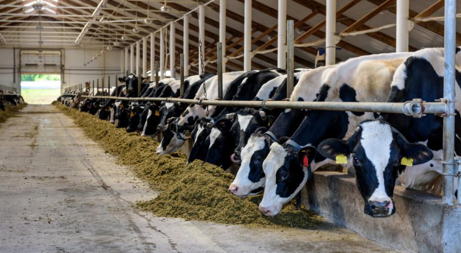 Coraz mniej krów mlecznych w Niemczech