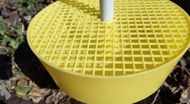 Obligatoryjnie każdy powinien wystawić żółte naczynia na polach rzepaku