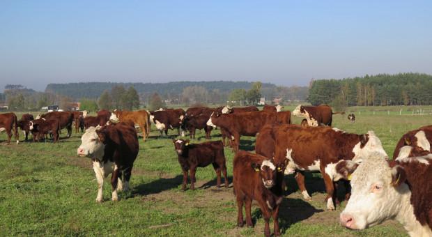 Właściciel zakładu mięsnego usłyszał zarzut oszustwa