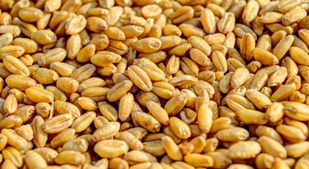 990 zł za tonę pszenicy na aukcji na Giełdowym Rynku Rolnym