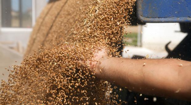 Stagnacja i mieszane notowania na krajowym rynku zbóż