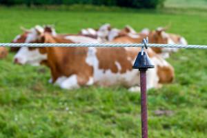 USA: Od 2003 r. gospodarstw mlecznych mniej o połowę