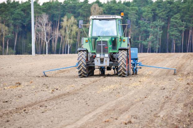 Wigor odmiany kukurydzy ma znaczenie