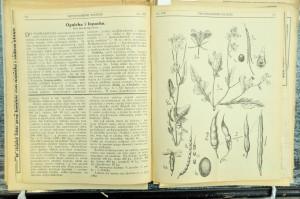 Poradnik wiedzy ochwastach zdokładnymi ilustracjami –1931 r.