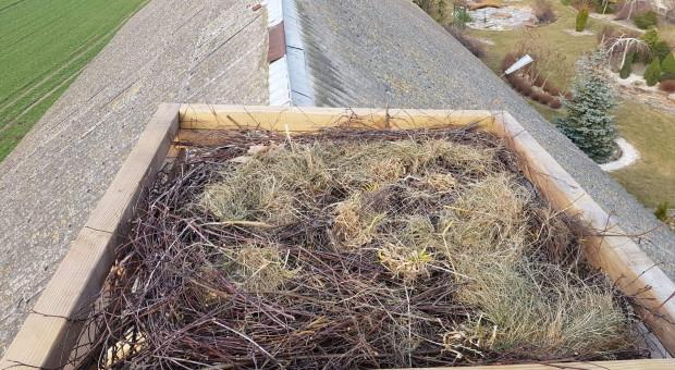 Jak zbudować gniazdo dla bociana?