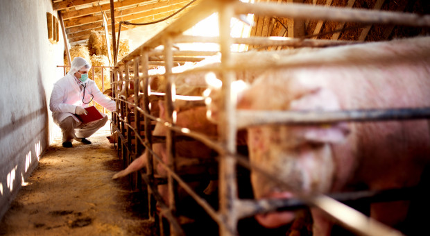 Sejmowa komisja pozytywnie o przeznaczeniu 120 mln zł na pomoc dla rolników