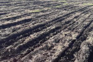 Szymczak: Jestem przeciwnikiem uprawy i siewu w mokrą glebę