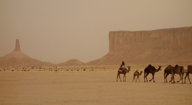 Arabia Saudyjska zasadzi na pustyni 10 mld drzew, by walczyć z emisją CO2