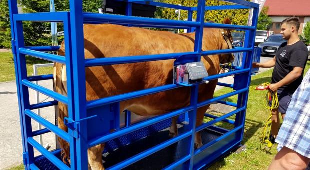 Zakup wagi do bydła – co warto wiedzieć?