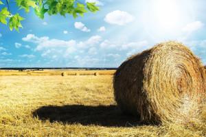 KOWR: średni czynsz dzierżawny w I półroczu br. wyniósł 15,1 dt: ha