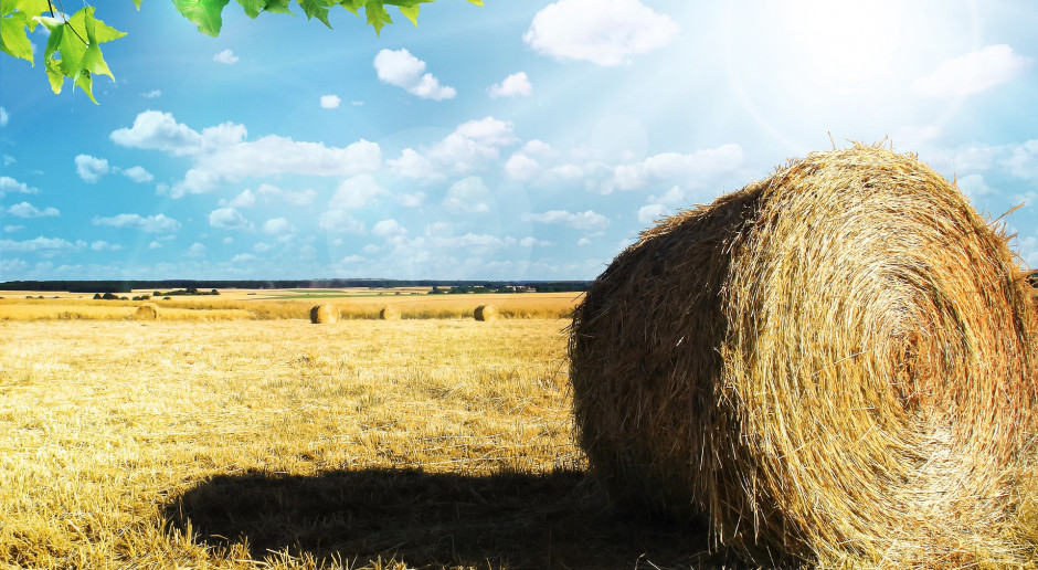 Mamy mniej gospodarstw rolnych w Polsce, za to są one coraz większe - podaje GUS
