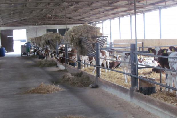 PFHBiPM: Hodowcy chcą inwestować w dobrostan zwierząt