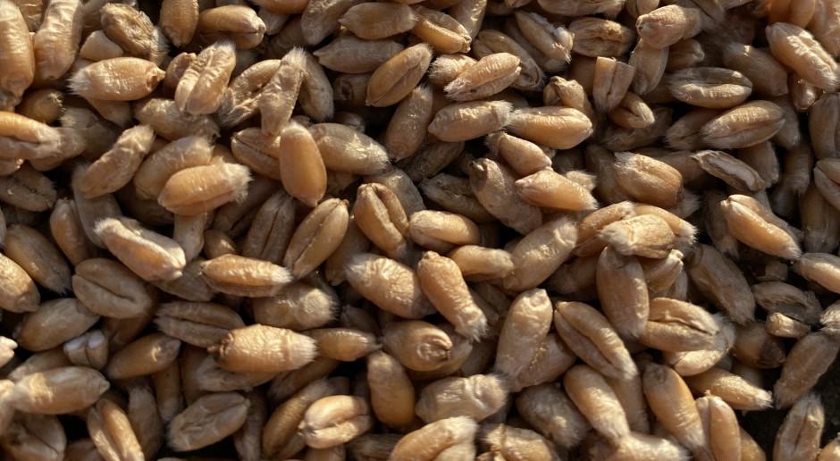 Bardzo mocne wzrosty notowań zbóż na giełdach