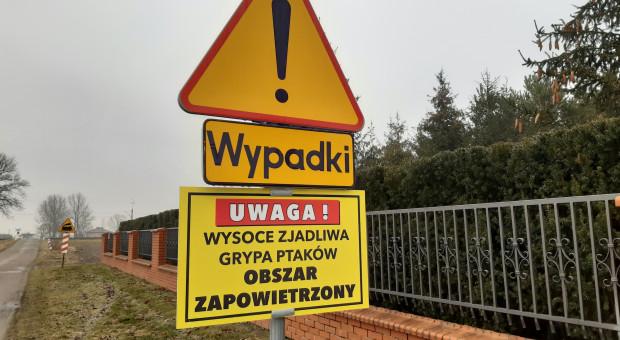 W Polsce już ponad 100 ognisk grypy ptaków