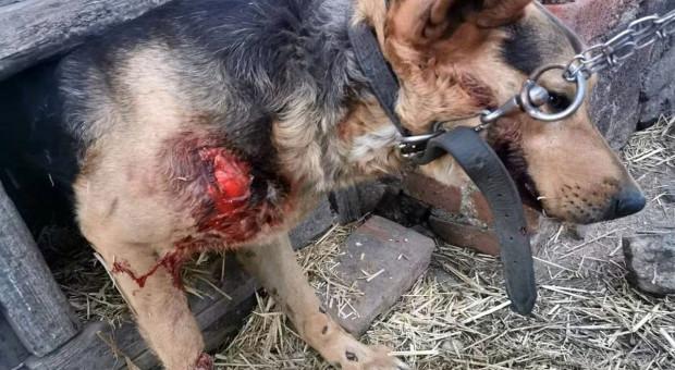 Sołtyska ciągnęła psa za samochodem