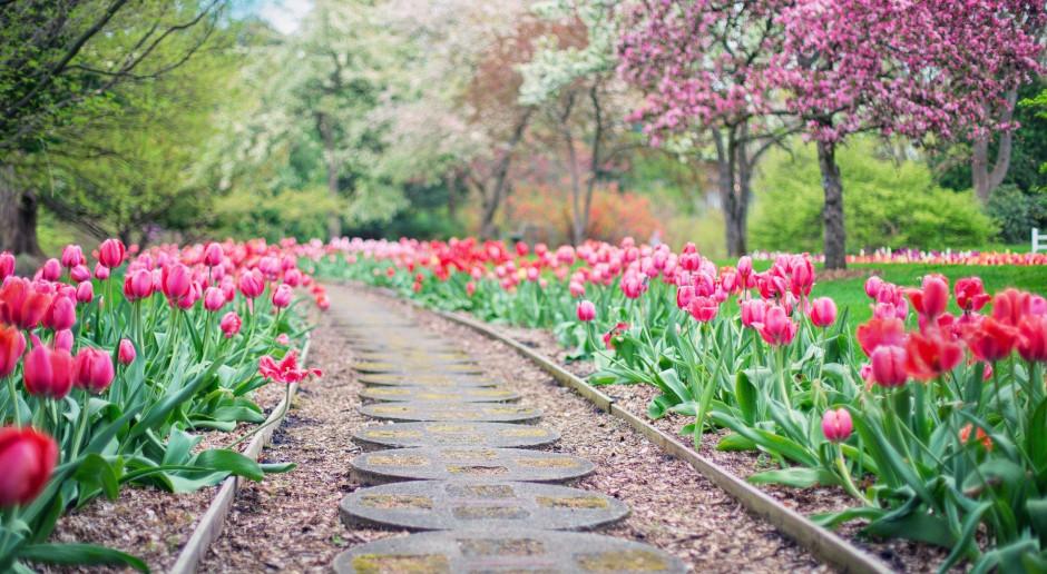 Holandia. Słynny park kwiatowy Keukenhof otwarty dla publiczności
