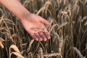 eDWIN - nowa jakość w polskim rolnictwie i ochronie roślin