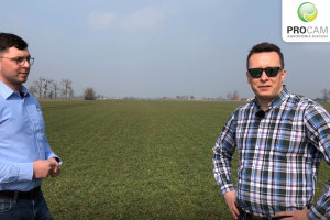 ARGUMENT pszenica ozima do bicia rekordów, uprawiana przez profesjonalistów