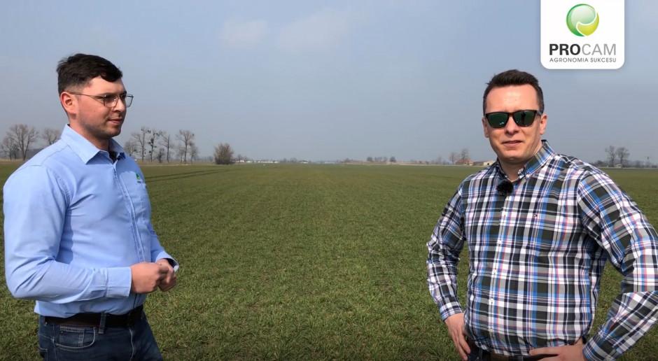 ARGUMENT pszenica ozima do bicia rekordów, uprawiana przez profesjonalistów. Relacja z centralnej wielkopolski