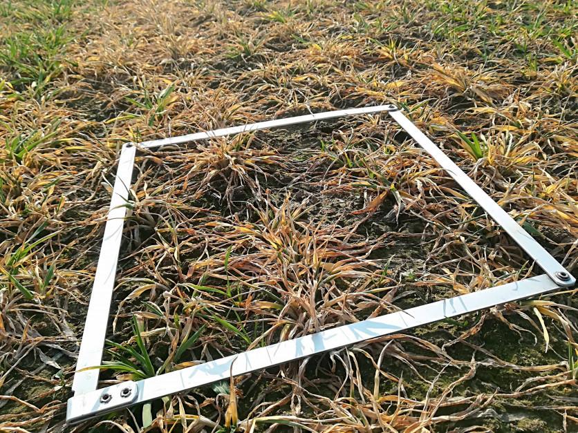 Wczasie tegorocznej zimy wystąpiły okresy silnych mrozów. Na polach pozbawionych okrywy śnieżnej mogło toprzyczynić się to przerzedzenia plantacji iosłabienia kondycji pozostałych roślin. Przerzedzone iosłabione zboża niestanowią już znaczącej konkurencji dlachwastów. Wymusza to potraktowanie wiosennego oprysku jako zasadniczego zabiegu chwastobójczego, anie jako korekty