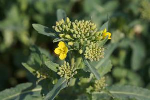 Jak skutecznie nawozić dolistnie? Jakie są skutki wiosennego lockdownu roślin?