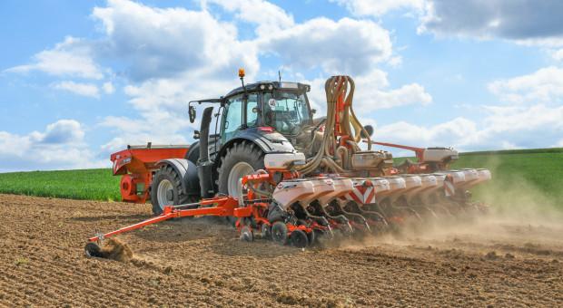Siew kukurydzy - jakie ceny za usługę?