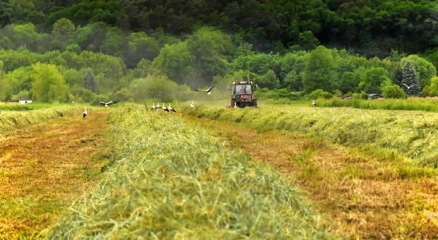 Ziejewski: Polskie rolnictwo jest już teraz dość ekologiczne