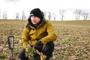 Pasowa, bezorkowa i orkowa uprawa rzepaku na ciężkiej glebie