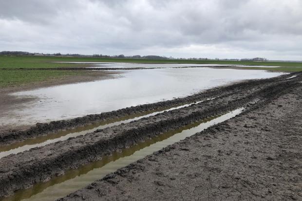 Powstałe zastoisko wodne w pszenicy ozimej Fot. Dawid Chwirot