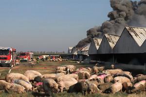 Reperkusje po pożarze megafermy w Alt Tellin