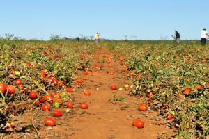 Rosja: Brakuje zagranicznych sezonowych pracowników w rolnictwie