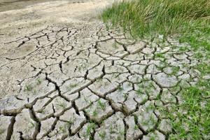 Belgia: Szkody spowodowane suszą uznane za klęskę żywiołową