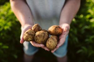Rolnictwo regeneracyjne odpowiedzią na zagrożenia systemu żywnościowego?