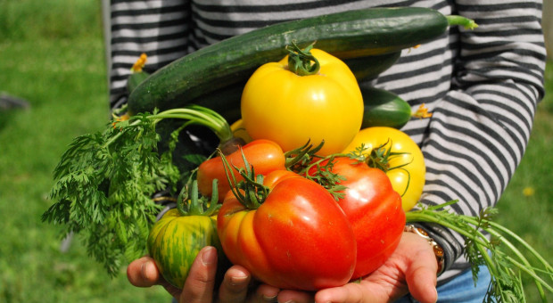 Żywność ekologiczna i zrównoważona priorytetem w stołówkach?