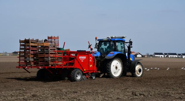 Od pola do stołu w uprawie ziemniaka - sadzenie