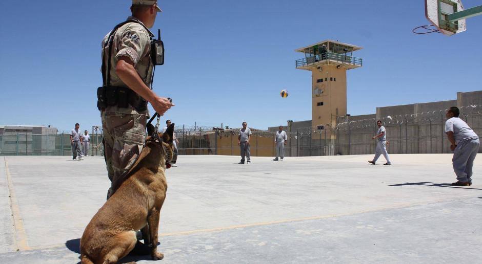 Rząd przyjął przygotowany w MSWiA projekt regulujący status zwierząt w służbach