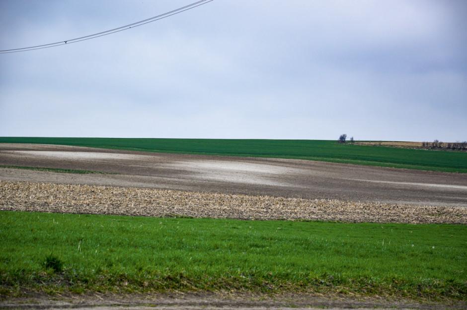 Ta jasna plama na polu to miejsce, gdzie wartość pH jest powyżej 7. W takich miejscach rośliny nie rosną zbyt dobrze