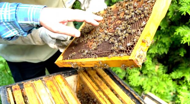 Ile kosztuje przydomowa pasieka? Cz.1 – ule i pszczoły