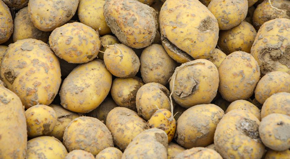 Odczyn gleby a choroby skórki ziemniaka