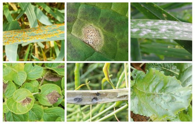 Będzie zamieszanie na rynku fungicydów