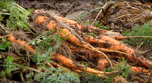 Resort rolnictwa przygotował projekt ustawy o rolnictwie ekologicznym