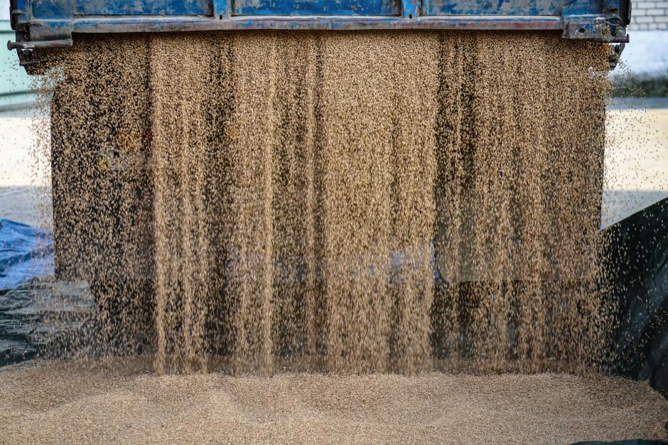 Kolejne silne wzrosty cen zbóż na światowych rynkach