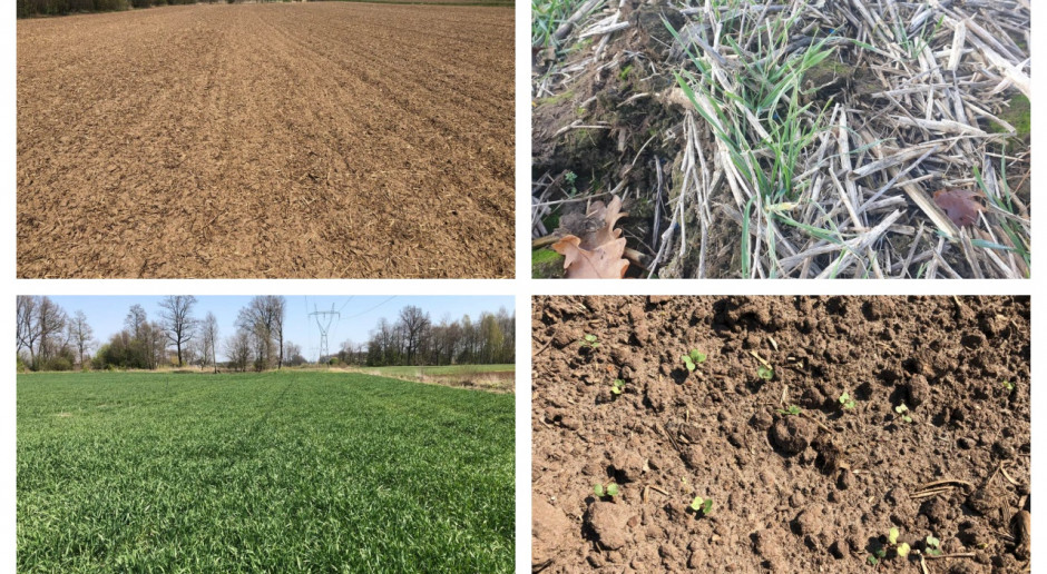Uprawy we wschodniej Wielkopolsce pod lupą młodej rolniczki