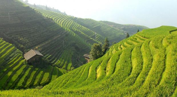 FAO: Drobni rolnicy odpowiadają za jedną trzecią produkcji rolnej