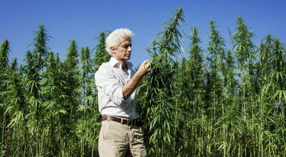 Wszystko o marihuanie - co jest legalne, a co zabronione?