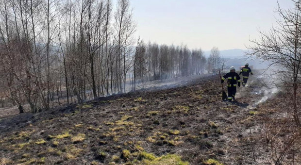Wypalanie traw na łące mógł przypłacić życiem