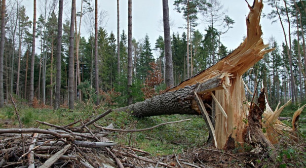 IMGW ostrzega przed silnym wiatrem, intensywnym deszczem i burzami